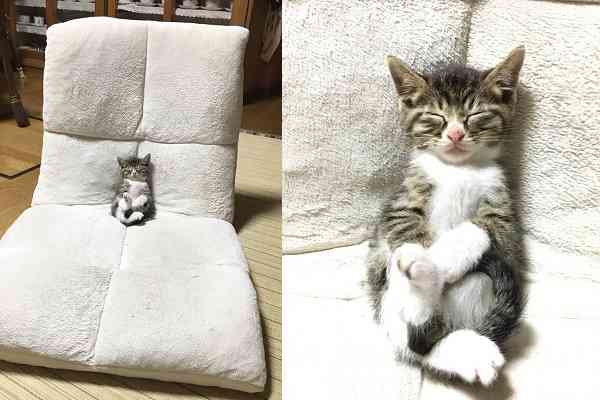 【取材】座椅子でスヤスヤ…上手に座りながら寝落ちした子猫がめちゃくちゃ可愛い!
