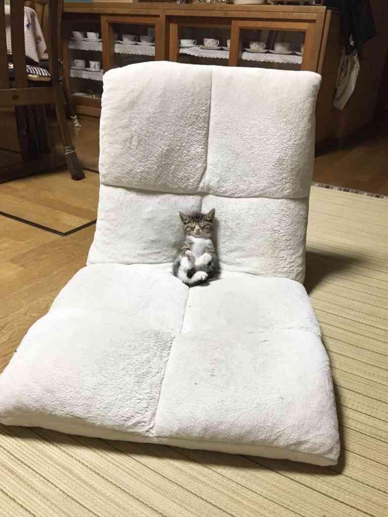 座椅子でスヤスヤ…上手に座りながら寝落ちした子猫がめちゃくちゃ可愛い!