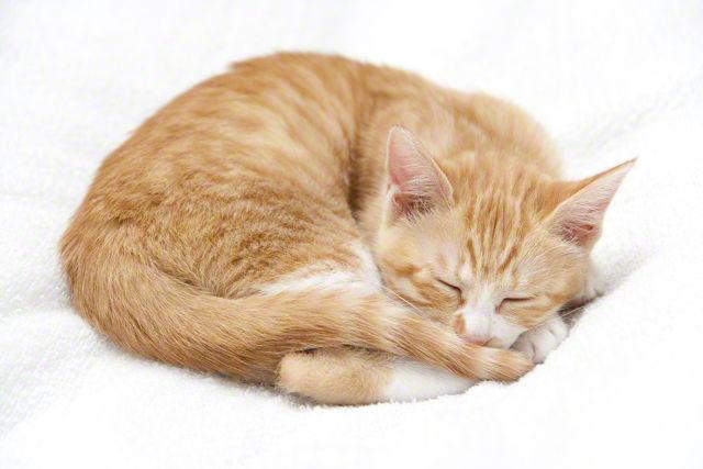 背景に同化して溶け込むステルス猫コンテスト【見つけられる?】 - NAVER まとめ
