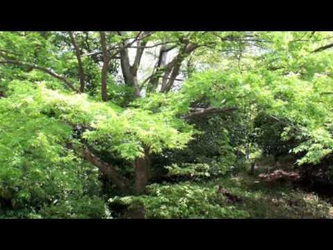 ショパンのノクターン - YouTube