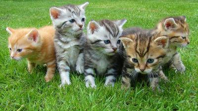 ネコ好きなら今すぐ転職すべき「ネコなで人」をネコ専門の動物病院が募集中 - GIGAZINE
