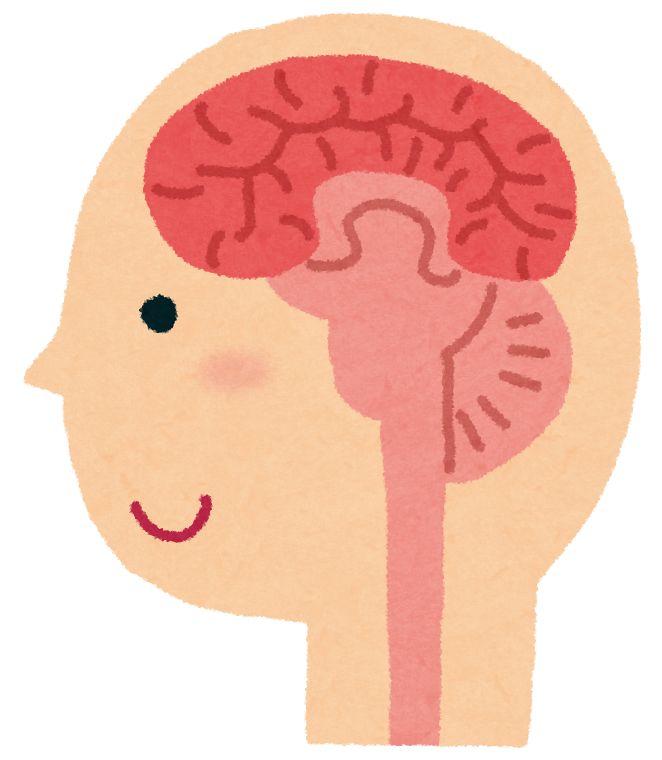 女性は脳梁が太いという説が否定される - NAVER まとめ