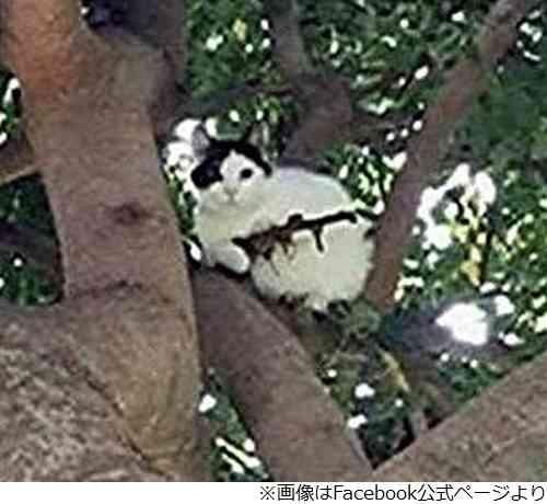 「ライフルを持った猫がいる」警察が出動 | Narinari.com