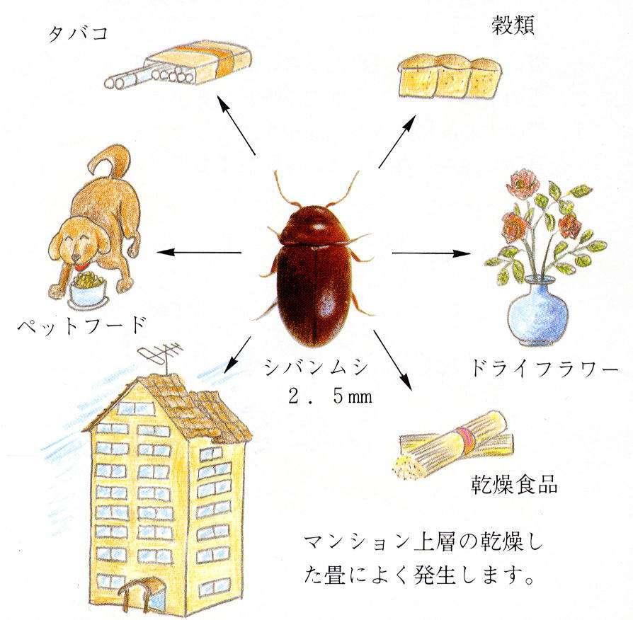 【苦手な人注意】台所で大量発生する「シバンムシ」ゴキブリより厄介との声も