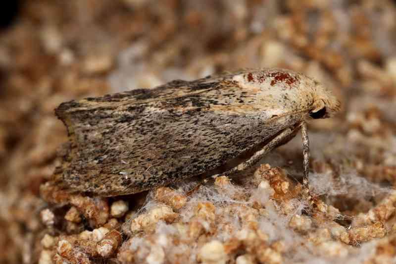 イモムシがレジ袋を食べることを確認 - プラスチックごみの生物分解に期待