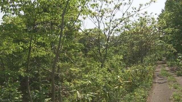 山菜採りの男性 クマに襲われけが 足で蹴って撃退 青森 | NHKニュース