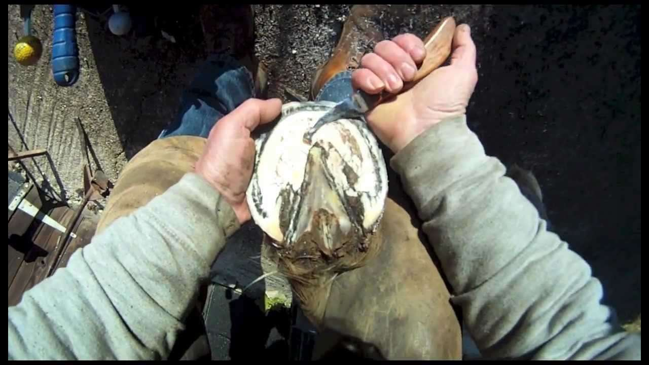 Horse Shoeing - YouTube