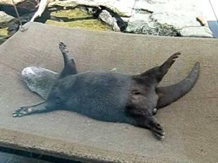 仰向けの動物を貼るトピ