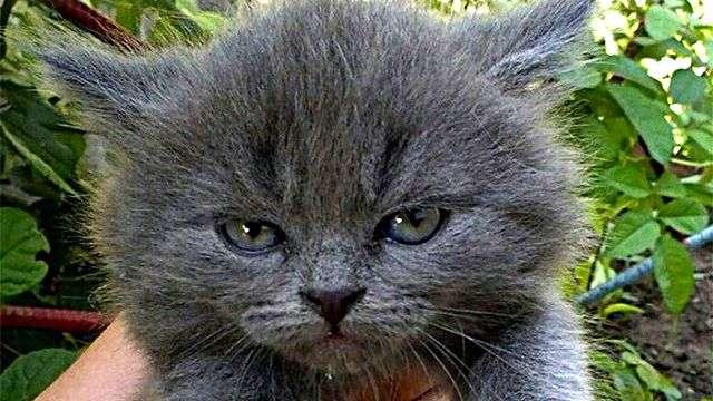 どんな顔でも許せちゃう。なにやらご不満げな子猫たちの写真を詰め合わせでお届け : カラパイア