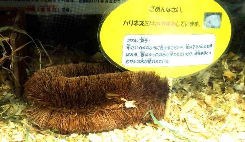 ハリネズミの代役は…ワタシ、タワシです 茨城県日立市の動物園