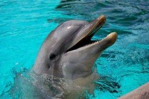 イルカが人の命を助けた事例のまとめ - NAVER まとめ