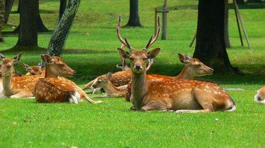 鹿せんべいを鹿に与えてケガする人が過去最多に!中には骨折した人も