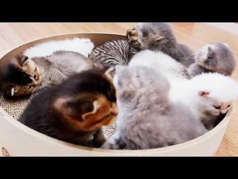 Целая корзина котят - YouTube