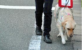 盲導犬と歩く町は? 視覚障害者の外出、記者が同行 - トピックス | sippo(シッポ) ペットのための情報・サービス