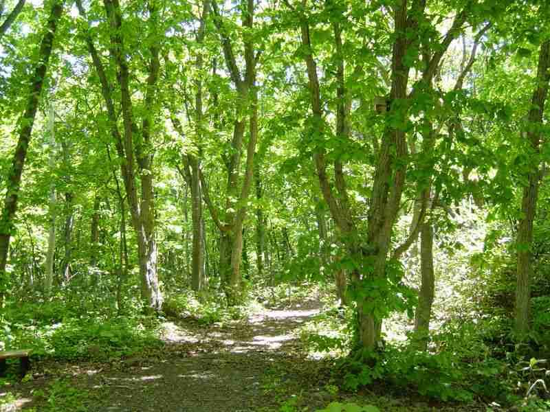 外資取得の北海道森林、前年比5倍の509ヘクタール