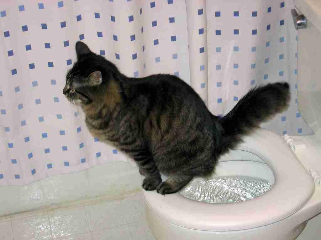 【いつから?】トイレトレーニング【どうやって?】
