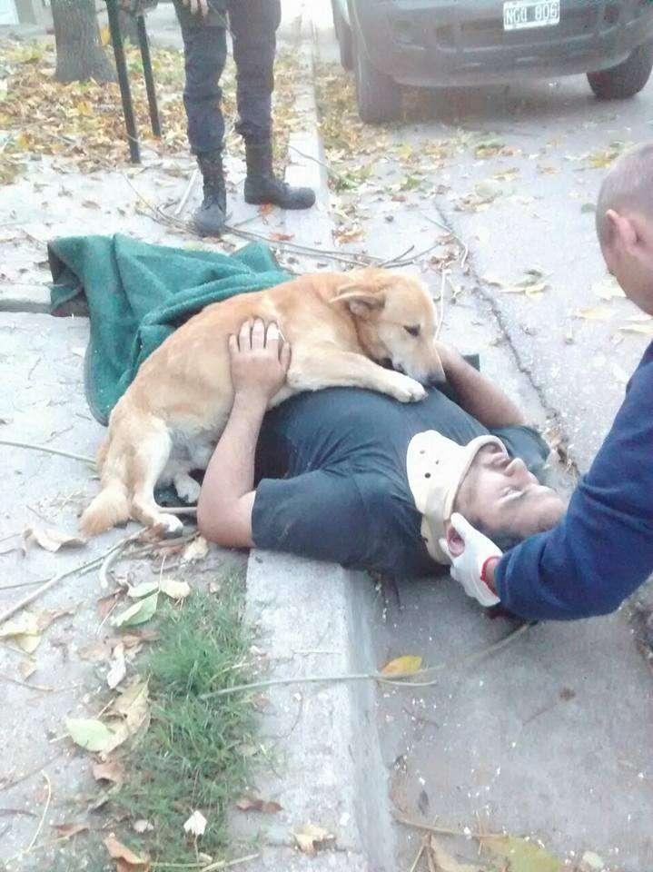 木から落ち意識を失った飼い主に、寄り添い続ける愛犬にジンとくる