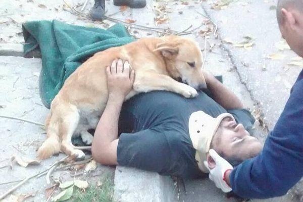 義理堅すぎる!木から落ちた主人に寄り添い続ける犬にジンとくる