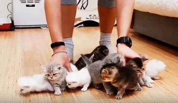こりゃ大変だわー。子猫10匹の撮影現場がカオスと化していた : カラパイア