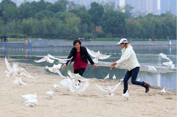 中国の結婚式で白いハトを飛ばしたところ・・・ : ZAPZAP!