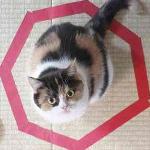 コードかテープがあればよい。驚くほど猫がホイホイする、猫転送装置の作り方がブレイク中