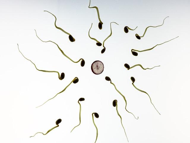 不妊治療クリニック院長ヤン・カールバート 自分の精子を使い約60人の父親に オランダ | カンタの良好な日々