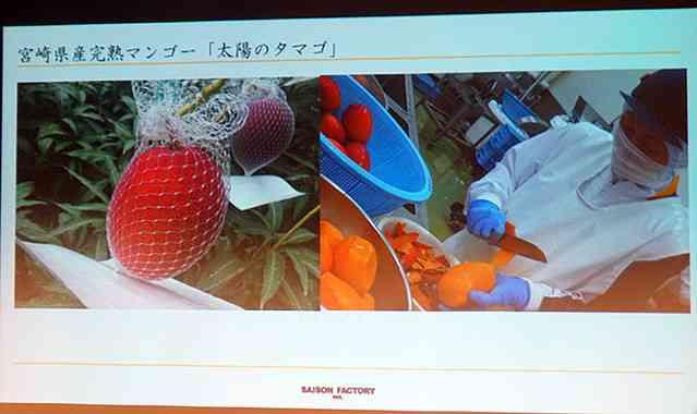 江崎グリコ、希少果実の高級アイスが7月発売決定 そのお値段は…