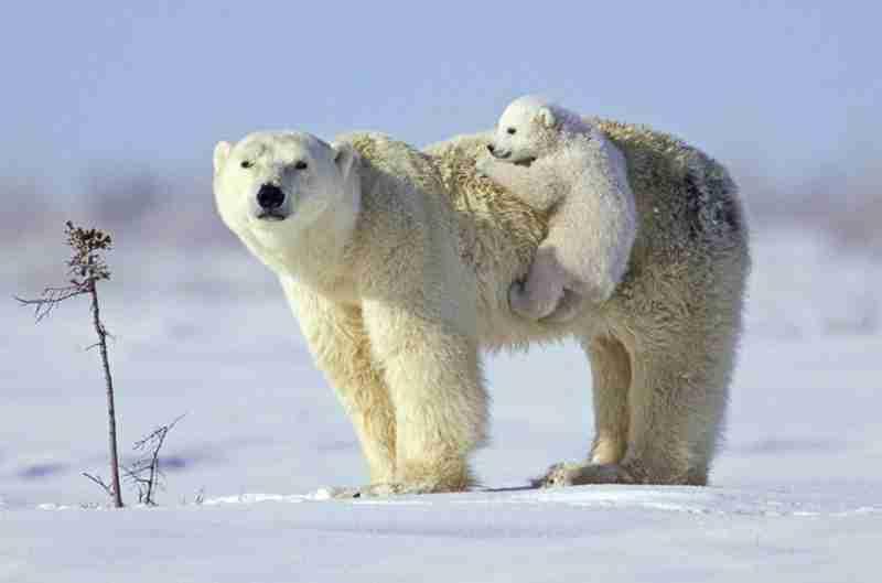 【画像】動物の赤ちゃん