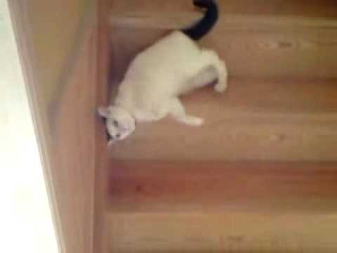 Funny cat going down the stairs - YouTube