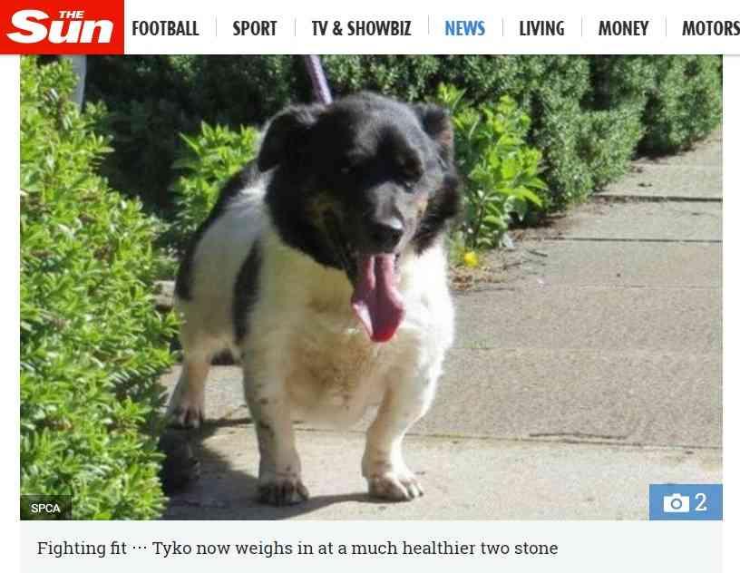「アザラシのよう」だった超肥満犬、37キロの減量に成功(スコットランド)