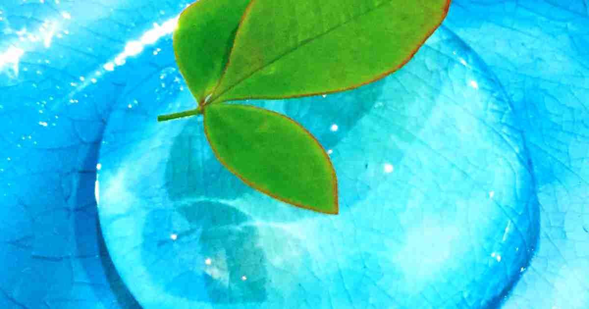絶品 再現レシピ 水信玄餅 by Cookatom [クックパッド] 簡単おいしいみんなのレシピが266万品