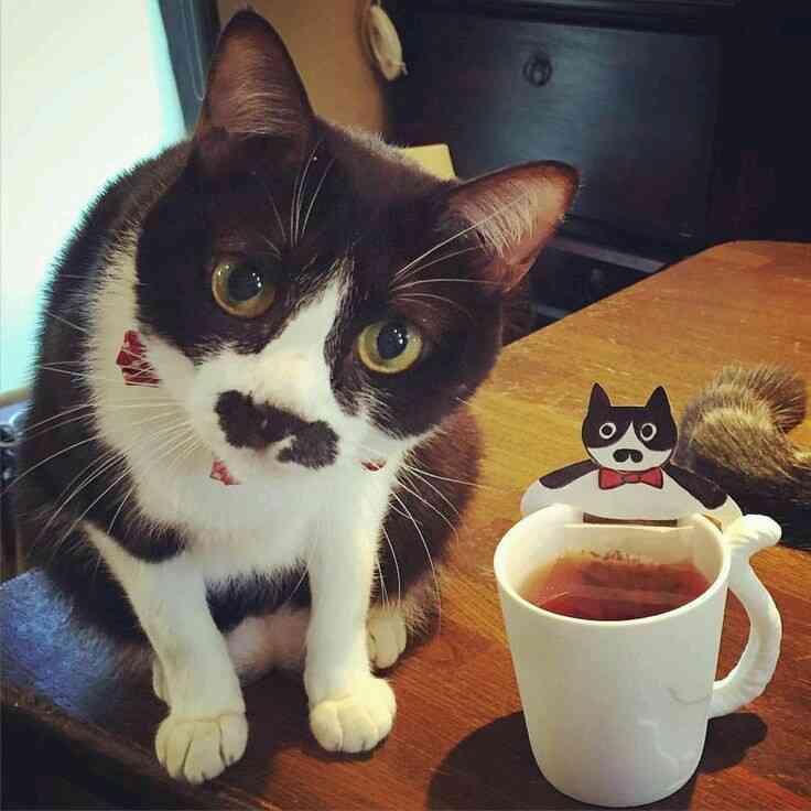 ガルちゃん猫カフェ15号店開店しました♪(初めての方も大歓迎!)