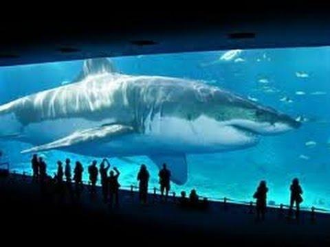 サメに鼻パンチは効かないらしい…代わりの対処法、難易度高すぎ!