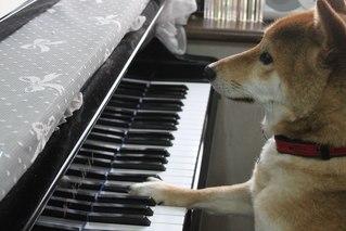 子どもの頃ピアノを習っていた人、語りましょう!