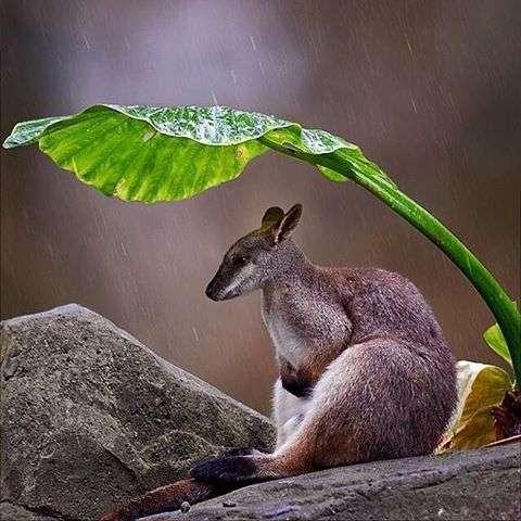 雨宿りしている動物・昆虫の画像で癒されるトピ♪