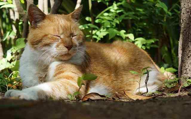 『高野山』は昔、猫の立ち入りが禁止されていた 理由が「分かる、分かりすぎる!」  –  grape [グレイプ]