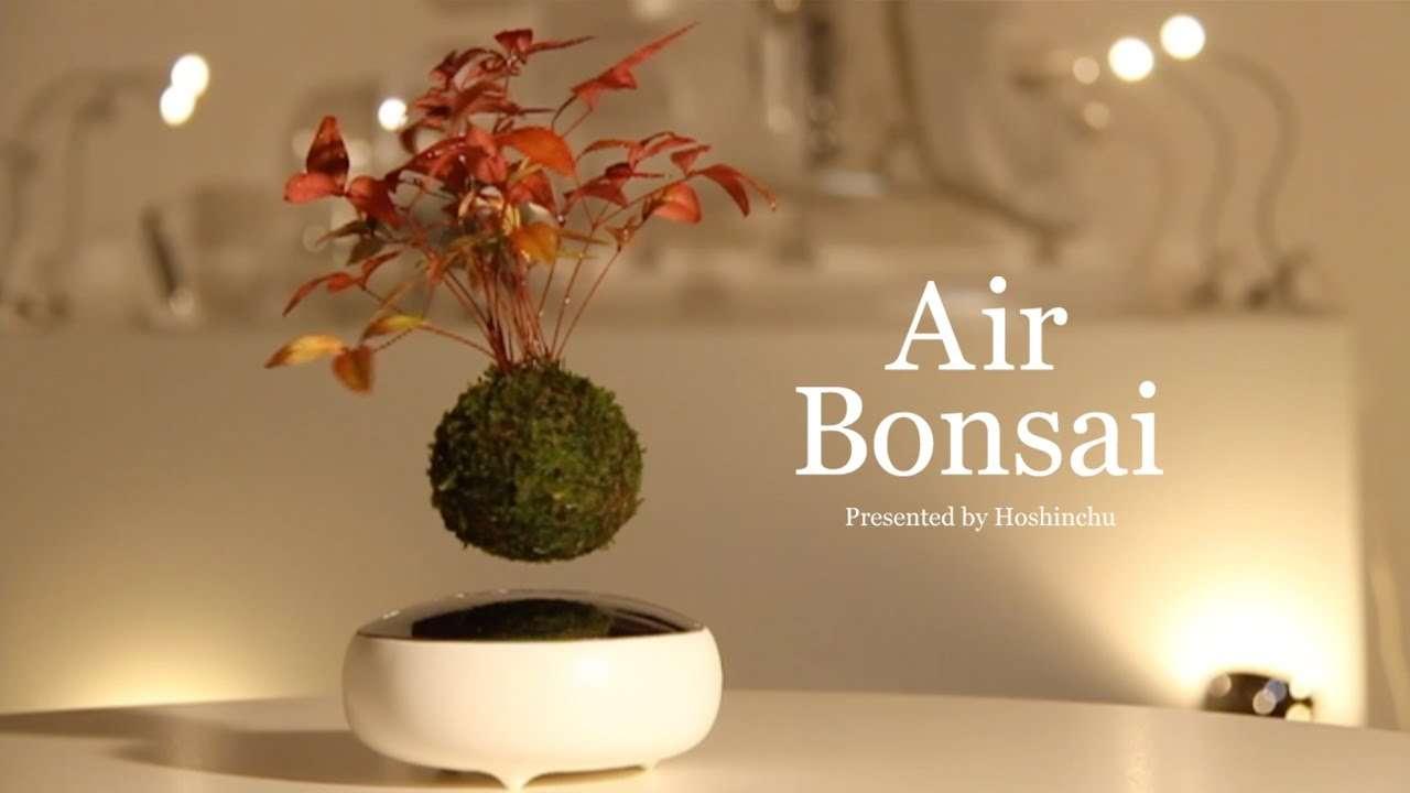 磁力で宙に浮く「Air盆栽」がカッコ良すぎる | netgeek