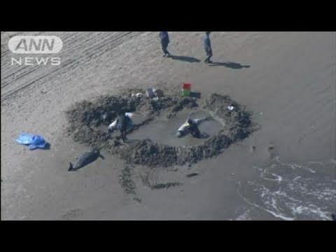 海岸にイルカ約50頭打ち上げられる 茨城・鹿嶋(11/03/05) - YouTube