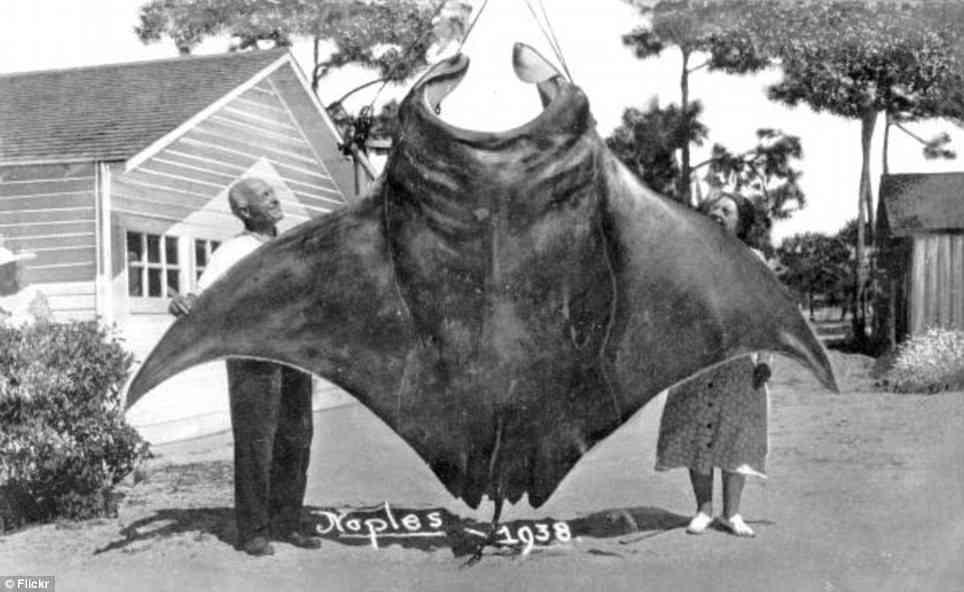 巨大生物の画像を貼っていくトピ