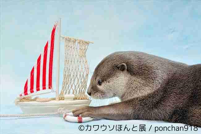 やんちゃでかわいいカワウソだらけの写真展 7月7日より浅草橋で開催
