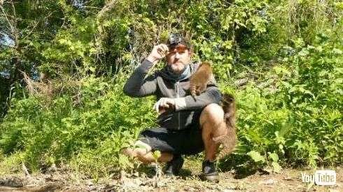 アライグマの子どもたちになつかれたおじさん 歩くと付いてきて、体にワイワイと登られる姿が目撃される