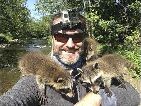 Incredible Baby Raccoon Encounter - YouTube