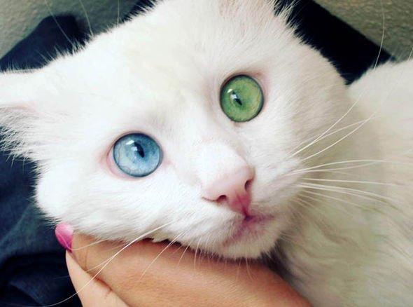 猫の世界にガルちゃんがあったら立ちそうなトピ