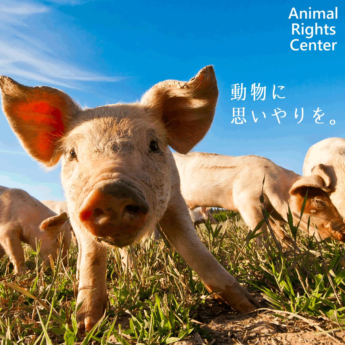 NPO法人アニマルライツセンター 毛皮、動物実験、工場畜産、犬猫等の虐待的飼育をなくしエシカルな社会へ