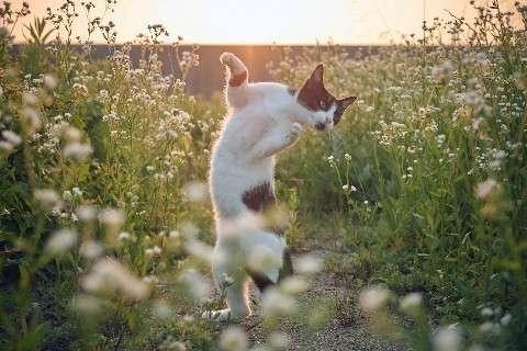 『のら猫拳』写真集が話題、1万部突破 どうやって撮影?裏話を聞いた (西日本新聞) - Yahoo!ニュース