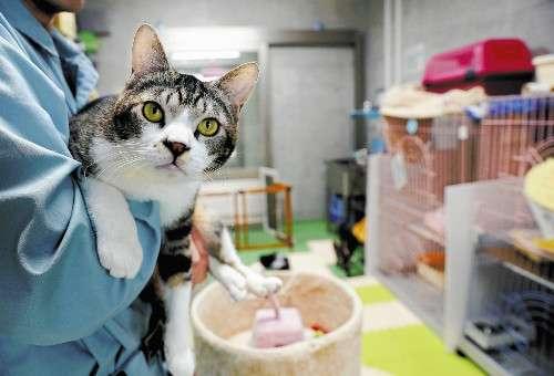 猫の命 官民で救え…ブームの陰 殺処分900匹 : 地域 : 読売新聞(YOMIURI ONLINE)