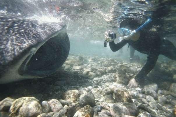 フカヒレは殺された後のサメのヒレか: 時々シュールな精進日和
