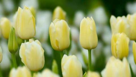 自分の誕生花を貼るトピ