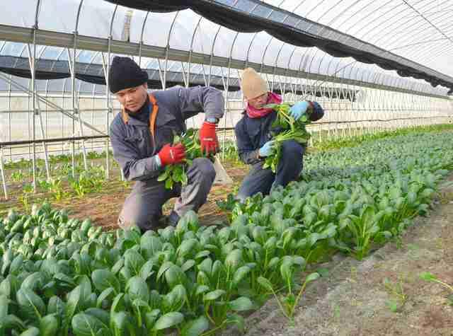 「移民いないふり」の限界…外国人労働者100万人超