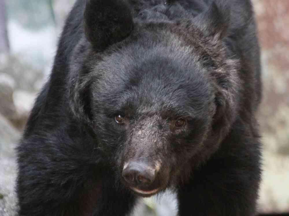 全文表示 | 熊を素手で撃退した63歳空手家 「大山倍達を超えた」  : J-CASTニュース